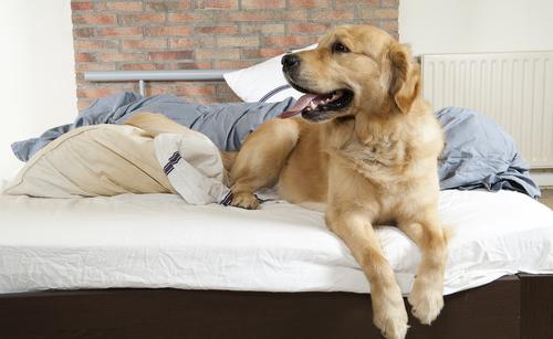 perros dominantes 2
