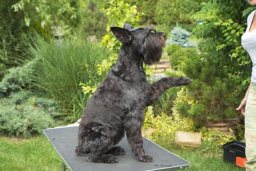 perros zurdos 2