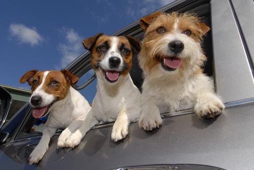 ¿Sabías que los perros pueden ser zurdos?