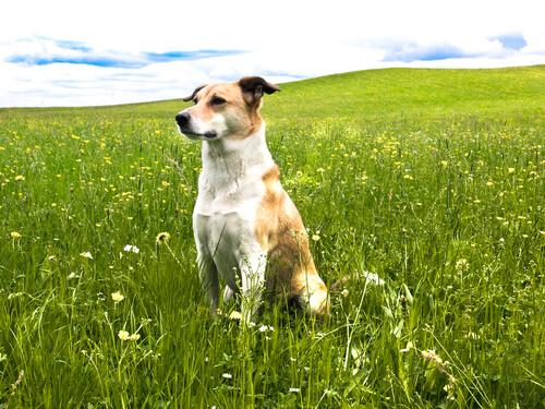 Las 6 bases de la psicología canina: entiende a tu perro y controla los malos hábitos