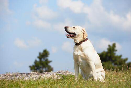 Los perros actúan de una determinada manera porque su psicología así se lo permite