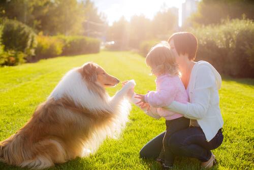 ¿Cómo funciona una terapia psicológica con perros y gatos?