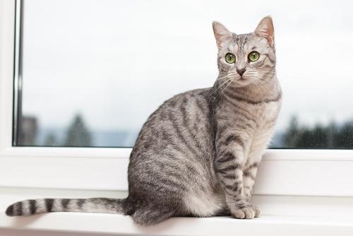 rabo gato 2