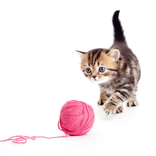 rabo gato 3