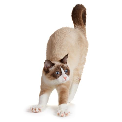 ¿Qué dice el rabo de tu gato?