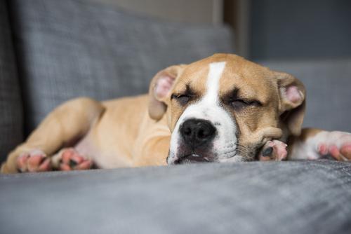 Regurgitación en perros y gatos