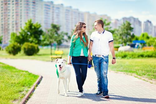 La salud cardiovascular y los beneficios de tener un perro