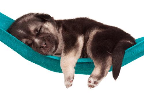 El sueño de los perros. ¿Os habéis parado a mirar como duermen vuestras mascotas?