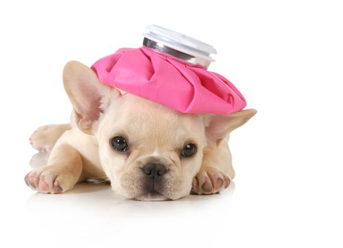vacunacion perros 2