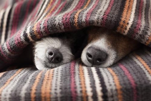 vacunacion perros 3