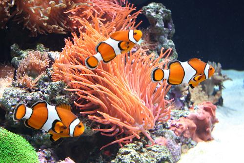 Sistemas de filtrado para tu acuario