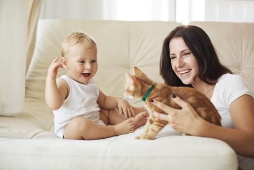 10 motivos para adoptar un gato adulto