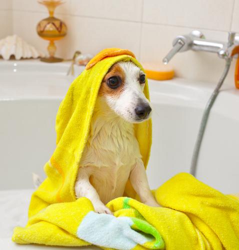 bañar a un perro 3