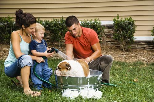 Pautas para mantener la higiene del perro en casa