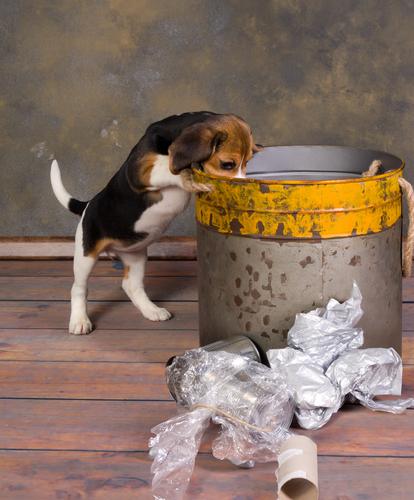 cachorro busca basura