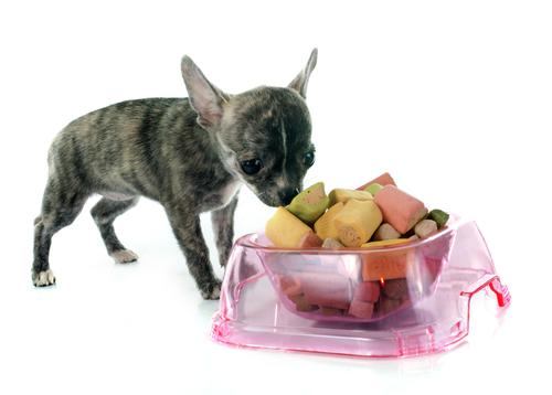 comida y perro