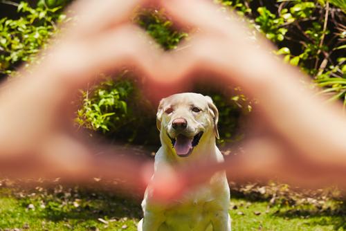 Coração e cachorro