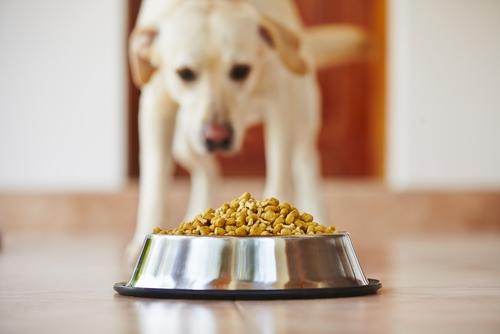 Mejor dieta para perros para bajar de peso