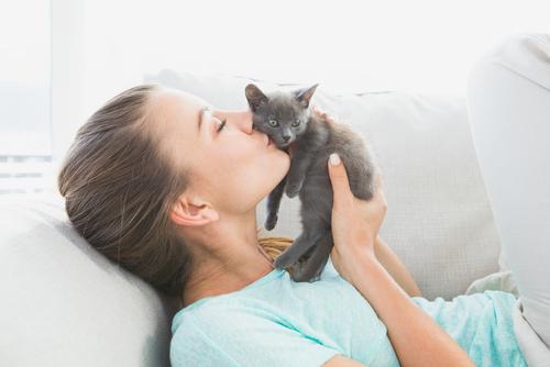 gatito casa