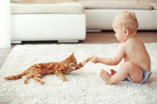 gato-con-niño
