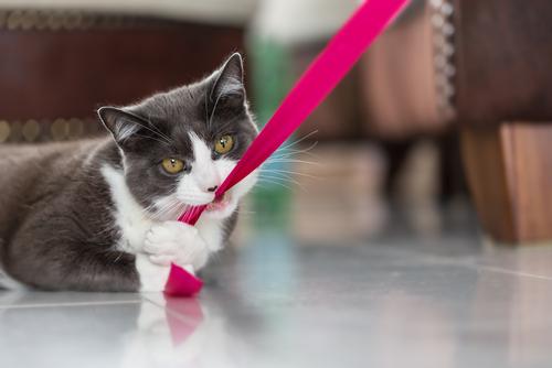 Cómo cuidar la dentadura del gato