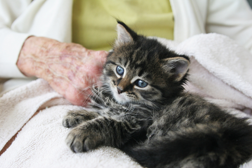 gato persona mayor