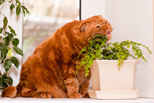 A cat and a catnip plant.