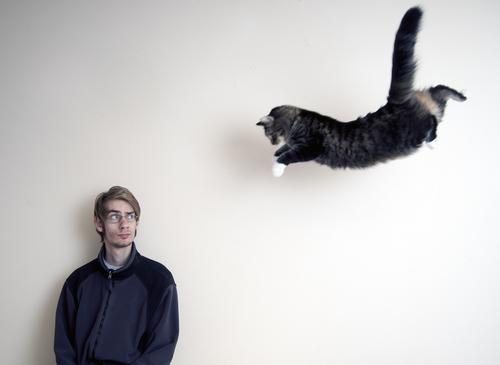 Descubre algunas curiosidades sobre los sentidos de los gatos