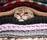 gato y frio