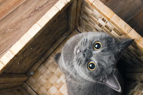 Cosas curiosas sobre gatos