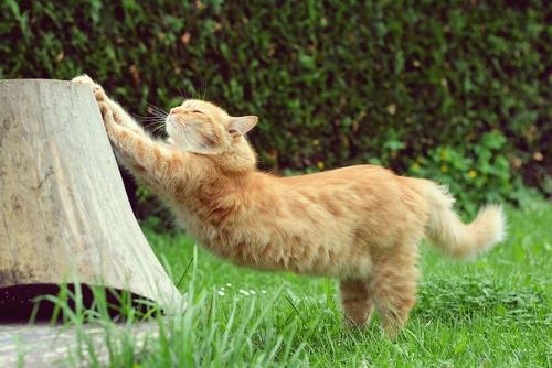 Te contamos cómo marcan los gatos su territorio