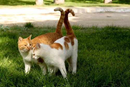 gatos enamorados 3