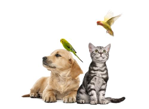 Perros y gatos vs. aves