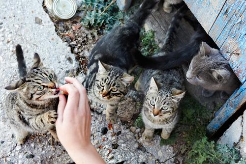 Gatos olhando para comida