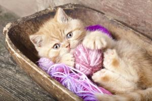 juguetes gatos 2