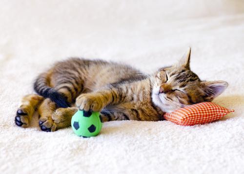Cómo hacer los mejores juguetes para gatos