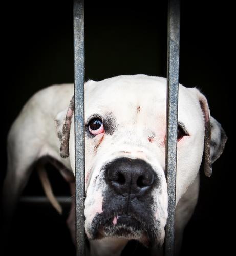 Cão abandonado em abrigo