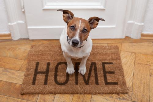 Cão em casa