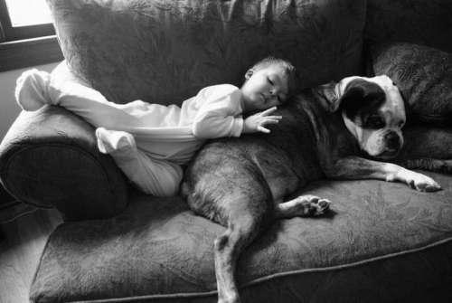 Relacionamento entre cachorro e bebê