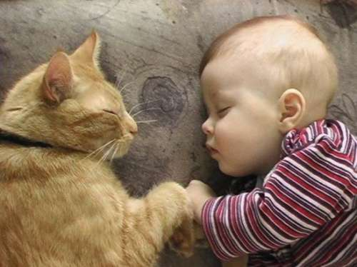 Beneficios de que los niños crezcan con mascotas