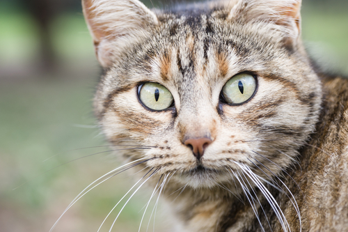 ojos-de-los-gatos