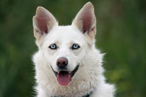 La cirugía de cataratas en los perros