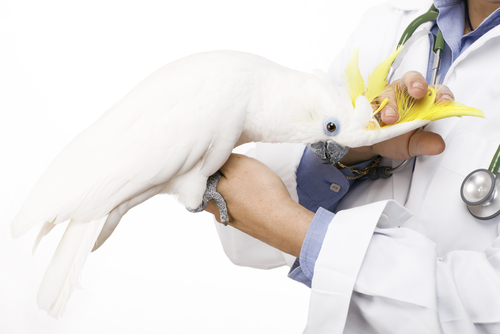 operacion mascota 2