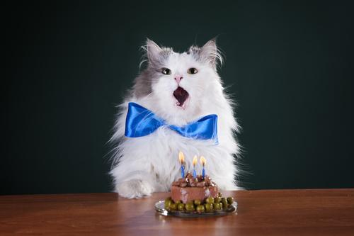 pastel gato