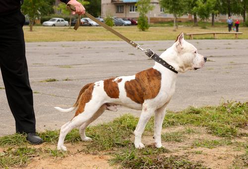 perro con correa