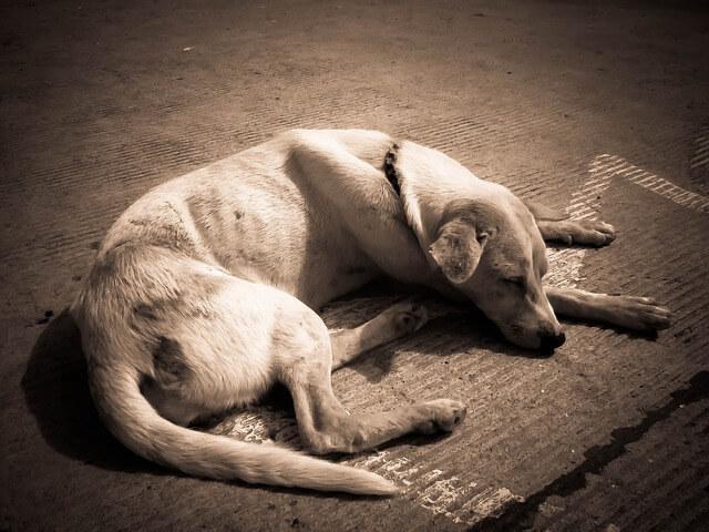 Cuando un perro está delgado, hay que ayudarlo a engordar.