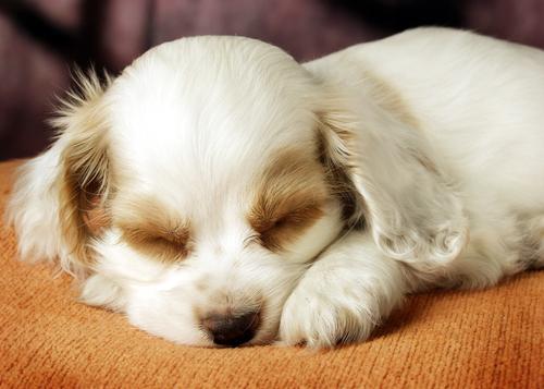 perro durmiendo 3