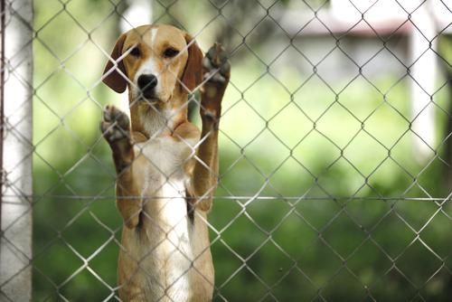 Los maltratadores de animales no podrán tener mascotas