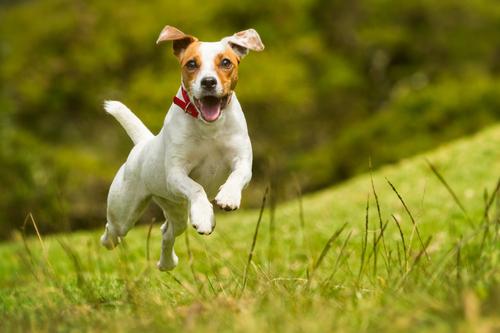 Resultado de imagen de perro corriendo