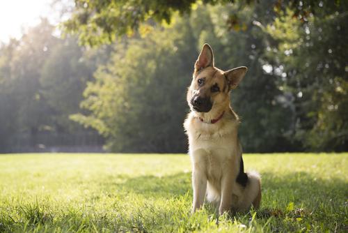 perro inclina la cabeza